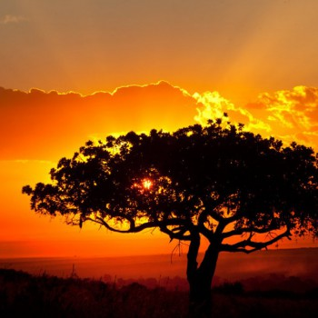 beautiful-african-landscape-sunset-by-catman-suha-980x653